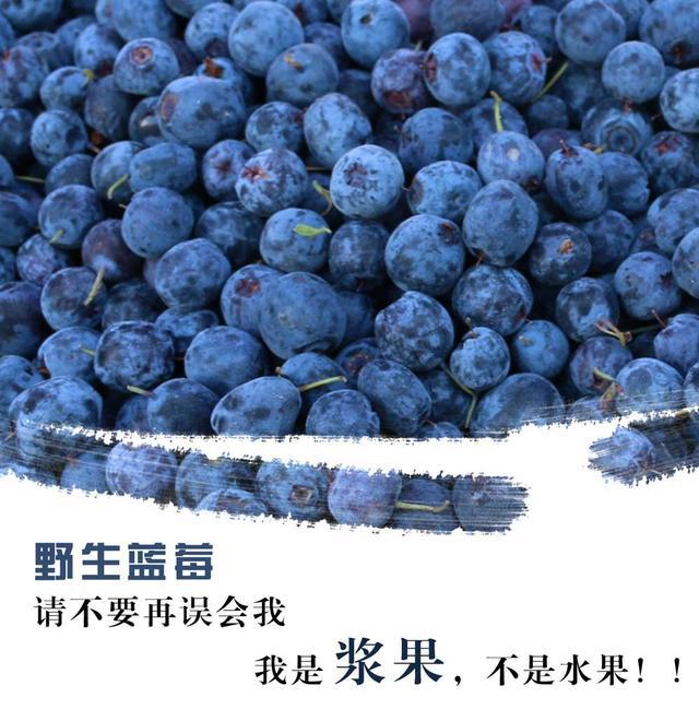藍莓我是漿果.png