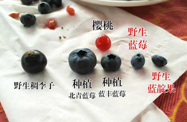 藍莓對比.png